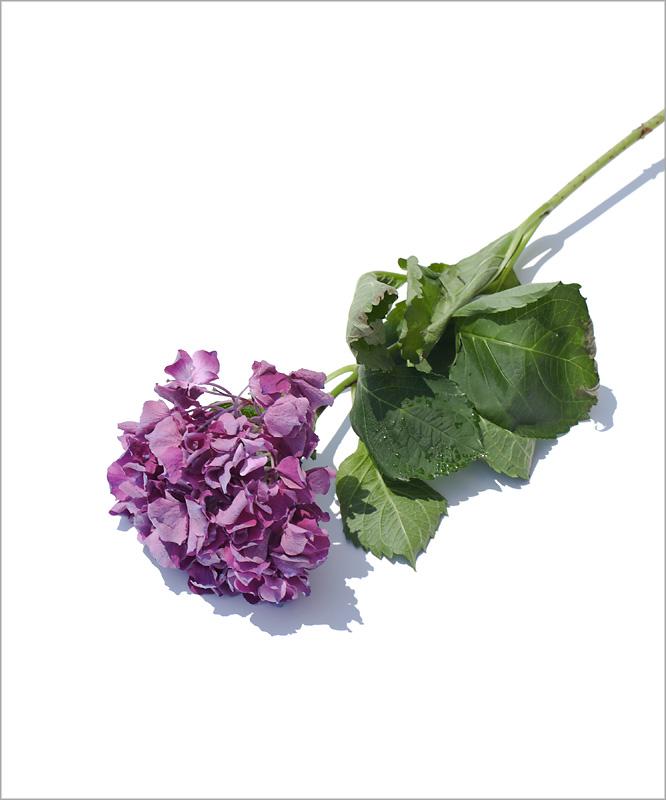 flowers3s.jpg