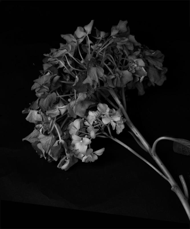 flowers3ss.jpg